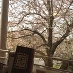 美福苑 - 窓のすぐ近くまで桜が来ています。