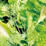 サラダデリMARGO - サラダのベースのグリーンリーフ
