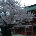すし哲 - 塩竈神社  夕暮れ時の山門の桜