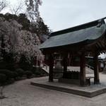 すし哲 - 塩竈神社 夕暮れ時の手水舎と桜