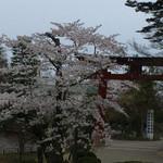 すし哲 - 夕暮れ時の塩竈神社