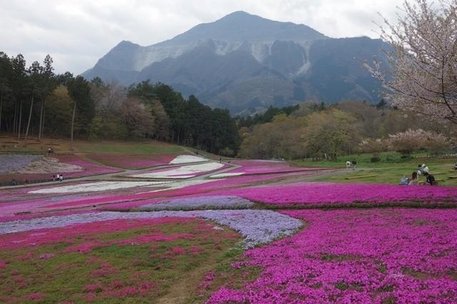 おきうね農園 - 羊山公園芝桜の丘