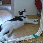 猫カフェ わが家 -