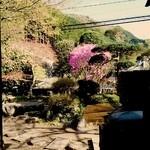 49969076 - 庭の紫つつじがキレーだ♡beerlove