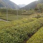 天空の里上ヶ流茶 - 300メートルの高地にある茶畑