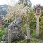 天空の里上ヶ流茶 - 店の前のさざれ石