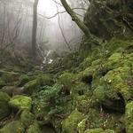 49997361 - 苔と霧に包まれる神秘的な森
