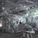 大手町カフェ - 植栽が生い茂る店内