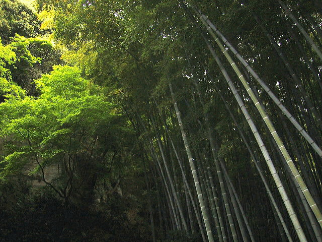 休耕庵 竹の庭の茶席