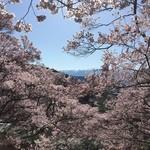 壱刻 - 全部 桜だらけ❗️
