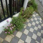 安座真ムーンライト・テラス - 階段に咲いていた花