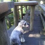 養老茶屋 - 愛犬もベランダで