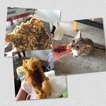 中本鮮魚店 - もずくとグルクン グルクンはだいぶ猫さんに食われた…