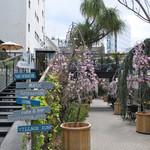 フレスコ コーヒー ロースターズ - プランターに桜