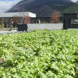 湯布院の豊かな土壌で育んだ安心・安全の食材選び