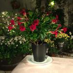 ラブレー - 夜のテラス席。お花を前に。