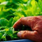 炭焼家 てんぷす - 農家さんが丹精込めて育てたお野菜