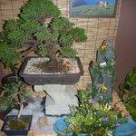 しん東 - 今月の盆栽