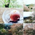 50362144 - 桜を眺めながら桜アイスクリームを食すぅ~