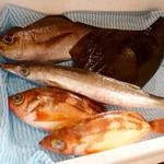 ほづみ - 2016/4/☆  お魚、どれにしましょう?