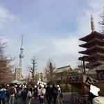 50503556 - 浅草寺五重塔とスカイツリー。