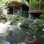 柳生の庄 - 庭の池には鯉が5-6匹