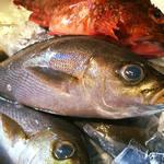 taverna minimo - 鮮魚