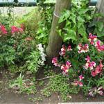 天現寺ガーデン - タンポポも咲いていました!!