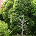 天現寺ガーデン - 鳩が集まる天現寺交差点