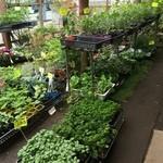 大渕ふる里村 - 野菜の苗もたくさん