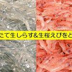 SUNZOK - 【公式】獲れたて生しらす&生桜えび 朝8時から提供中!