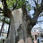 国分寺そば - 神奈川県指定天然記念物「海老名の大ケヤキ」