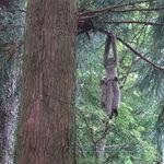 登六庵 - 木の上の小動物飾り物