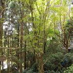 登六庵 - 庭から眺める森(FINE画像)