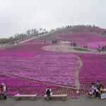51099506 - 茶臼山芝桜まつり☆展望台からの眺め★ハートになってます♪