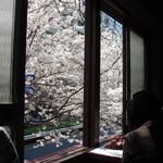 511336 - 桜がよく見えます!
