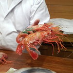 鮨 しもくら - 大きな牡丹海老