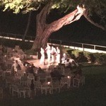 51236925 - キアヴェの樹