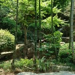 51255973 - 庭園写真真ん中に!タヌキが!?