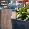 オレンジ コーヒー - ドリンク写真:ホットコーヒーお店の外で頂く