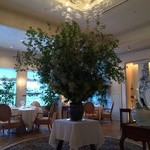 アロマフレスカ - この木なんの木