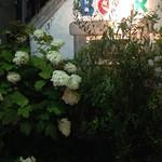 プチガーデン下北沢 - 2016.5  柏葉紫陽花の向こうにカラフルなBEERの文字
