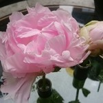 51596286 - テーブルの花(シャクヤク)