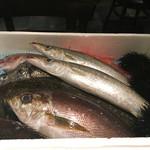51614015 - 鮮魚プレゼンテーション