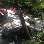 51773353 - 世界遺産の弥山原生林の中の国立公園 もみじ谷