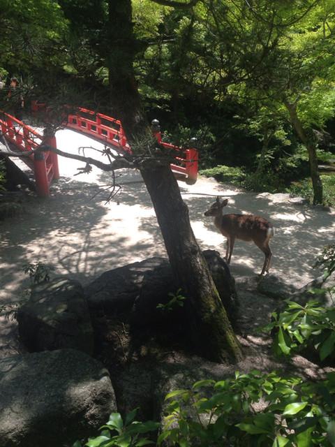 日帰りお食事処 もみぢ - 世界遺産の弥山原生林の中の国立公園 もみじ谷