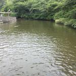 乃木そば神谷 - お店の裏手にある鯉の池