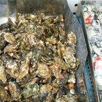 沖野水産 - 焼き牡蠣。before