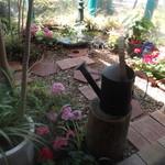 51984819 - 中庭。お花が、可愛い~。