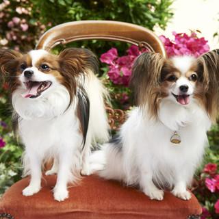 フランスのレストランのように愛犬も入店できます。